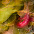Penny Meyers - Crabapple Abstract