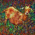 Lyn Voytershark - Curious Goat in Vivid...