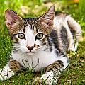 Cristina-Velina Ion - Cute kitty in the grass