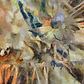 Dancing Dreams by Joe Misrasi