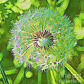 David Letts - Dandelion Floret