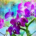 Kathleen Struckle - Delicate Orchids