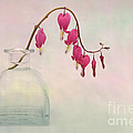Ann Garrett - Dicentra in a Glass Vase...