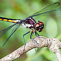 Dawna  Moore Photography - Dragonfly