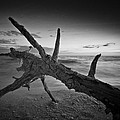 Bradley R Youngberg - Driftwood On Bonita Beach