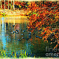 Joan  Minchak - Ducks at Hinckley Lake...