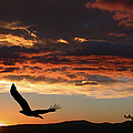 Shane Bechler - Eagle at Sunset