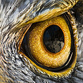 Brian Archer - Eagle Eye