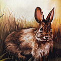 Sandi OReilly - Eastern Cottontail Rabbit