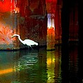 Sue Jacobi - Egrets have a PALACE for...