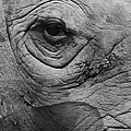 Bruce Bley - Eye of a Rhino