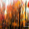 Tom Gari Gallery-Three-Photography - Fall Trees of Bucks...