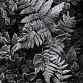 Richard George - Ferns