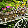 Flower Cart In Garden by Elena Elisseeva