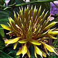 Luther Fine Art - Flower - Sultry Dahlia -...