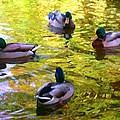 Amy Vangsgard - Four Ducks on Pond