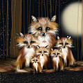Karin Taylor - Fox Family