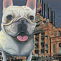 Ania M Milo - Frenchie At Inner Harbor...