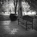 Ann Powell - Garden Bench black and...