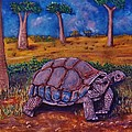 Richard Goohs - Giant Tortoise
