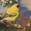 Bruce Newcomer - Goldfinch