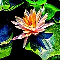 Annie Zeno - Gorgeous Water Lily