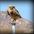 Susan Garren - Got My Eyes On You Owl