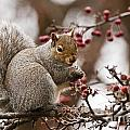 World Wildlife Photography - Gray Squirrel Pictures 60