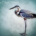 Barbara Chichester - Great Blue Heron