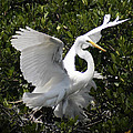 E B Schmidt - Great Egret 03