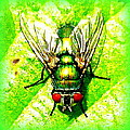 The Creative Minds Art and Photography - Green Bottle Fly