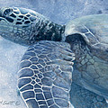Randall Scott - Green Sea Turtle