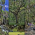 Allen Beatty - Hanging Spanish Moss...