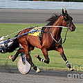 Dwight Cook - Harness Racing 5
