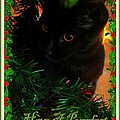 Jennifer Doll - Have a purrfect Holiday...