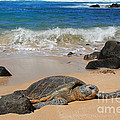Leslie Kirk - Hawaiian Green Sea Turtle
