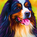 Michelle Wrighton - Colorful Bernese...