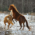 Paul Lyndon Phillips - Horses at Play -...
