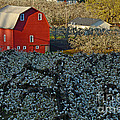 Nick  Boren - I Love Red Barns
