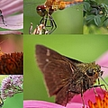 Juergen Roth - Insect Macro Photography...