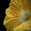 Inspired Nature Photography By Shelley Myke - Invitation to Beauty...