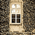 Colleen Kammerer - Ivy Windows in Sepia -...