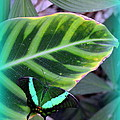 Jade Butterfly With Vignette by Carla Parris