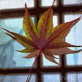 Nina Silver - Japanese Maple on Glass