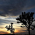 Ellen and Udo Klinkel - Joshua Tree Sunset
