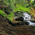 John  Greaves - Jungle Stream Kauai