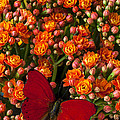Kalanchoe Plant With Butterfly by Garry Gay
