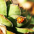 Ladybug And Chick by Chris Berry