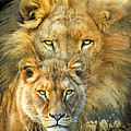Carol Cavalaris - Lion And Lioness-...