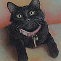 Pamela Humbargar - Little Black Kitty